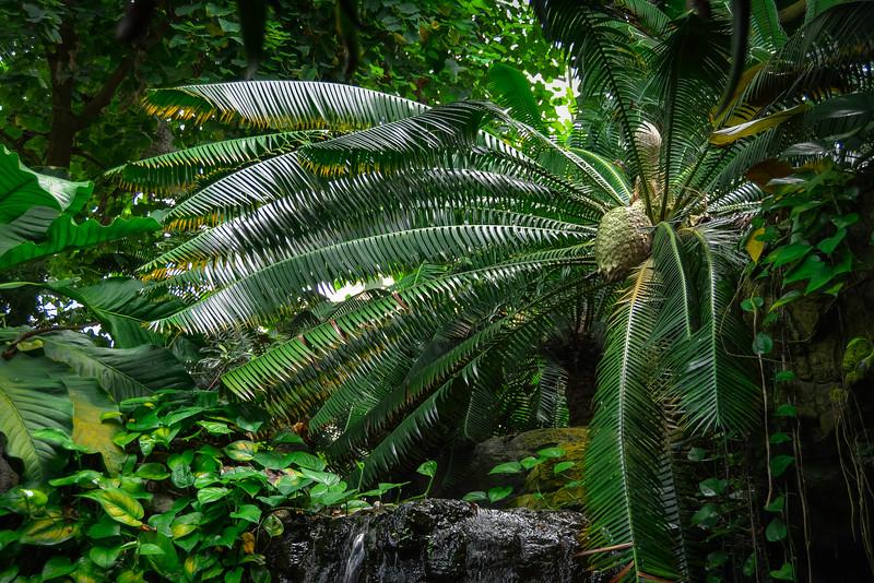 climatron st louis botanical garden